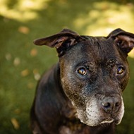 Adoptable Davey enjoys chasing toys and belly rubs; meet him at Orange County Animal Shelter
