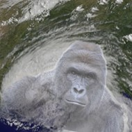 National Hurricane Center still hasn't added Harambe to list of storm names