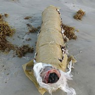 An 11-pound 'blunt' washed up on Daytona Beach last weekend