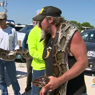Of course a guy named 'Wildman' caught a 17-foot Florida python