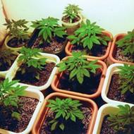 Florida Senate president considers special session on medical marijuana