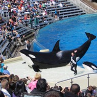 SeaWorld Orlando could be the first local theme park not ranked in the top 25 in the world for attendance