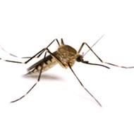 Mosquitos are loving Orlando right now