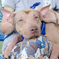 Orange County Animal Services breaks pet adoption record for July