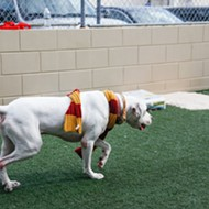 Orlando Pet Alliance is sorting rescued dogs into Hogwarts houses