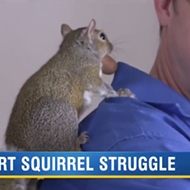 Florida man faces eviction over emotional support squirrel