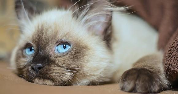 PHOTO VIA THE KITTY BEAUTIFUL/FACEBOOK