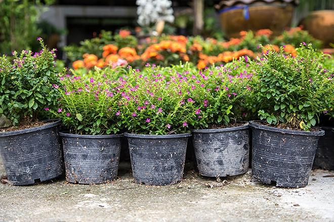 gal_plant_sale_adobestock_178513107.jpeg.jpg