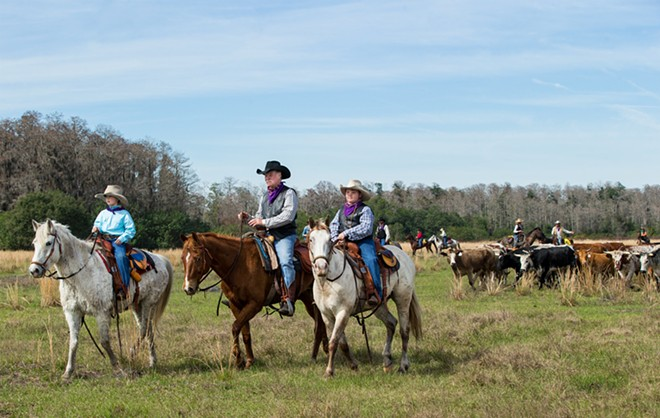 Left to right: Max Coggins, 8, his grandfather and trail boss Mike Wilder, and - twin brother, Rhett Coggins, lead hundreds of Cracker cows and riders toward - the arena in Kenansville on Jan. 30. Many families brought their kids - to participate in the Great Florida Cattle Drive so they could get a taste - of what it was like to be a Florida cow hunter living and working in - the 1800s. The drive re-creates the challenges, hardships and good times - for modern-day Floridians to experience. - View a complete gallery of photos of the drive here