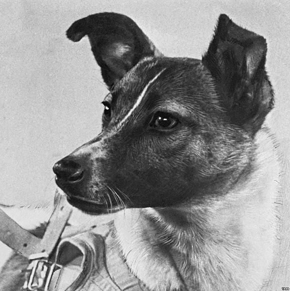 Laika, the first dog in space