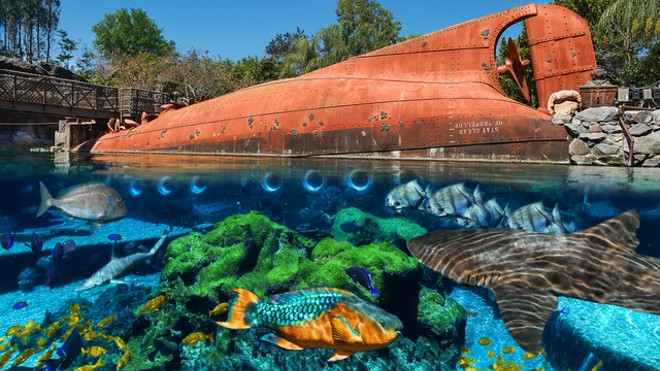 Shark Reef - PHOTO VIA DISNEY