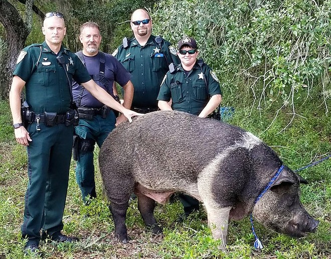 PHOTO VIA ALACHUA SHERIFF'S OFFICE/TWITTER