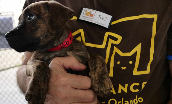 IMAGE COURTESY PET ALLIANCE OF GREATER ORLANDO