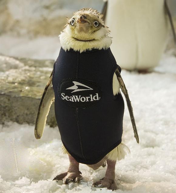 PHOTO VIA SEAWORLD ORLANDO