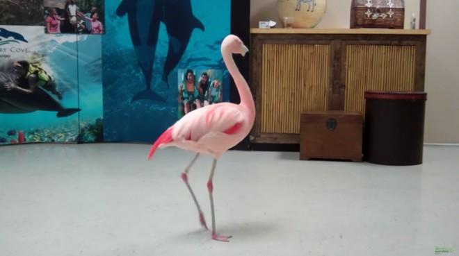 Pinky - SCREENGRAB VIA BUSCH GARDENS/YOUTUBE
