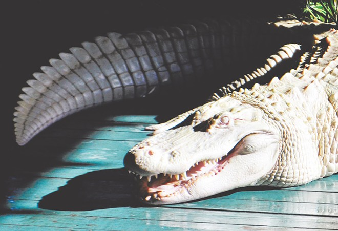 Gatorland - PHOTO VIA GATORLAND