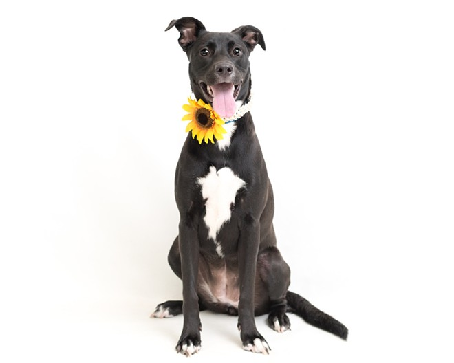 PHOTO BY PAWSITIVE PET PHOTOGRAPHY