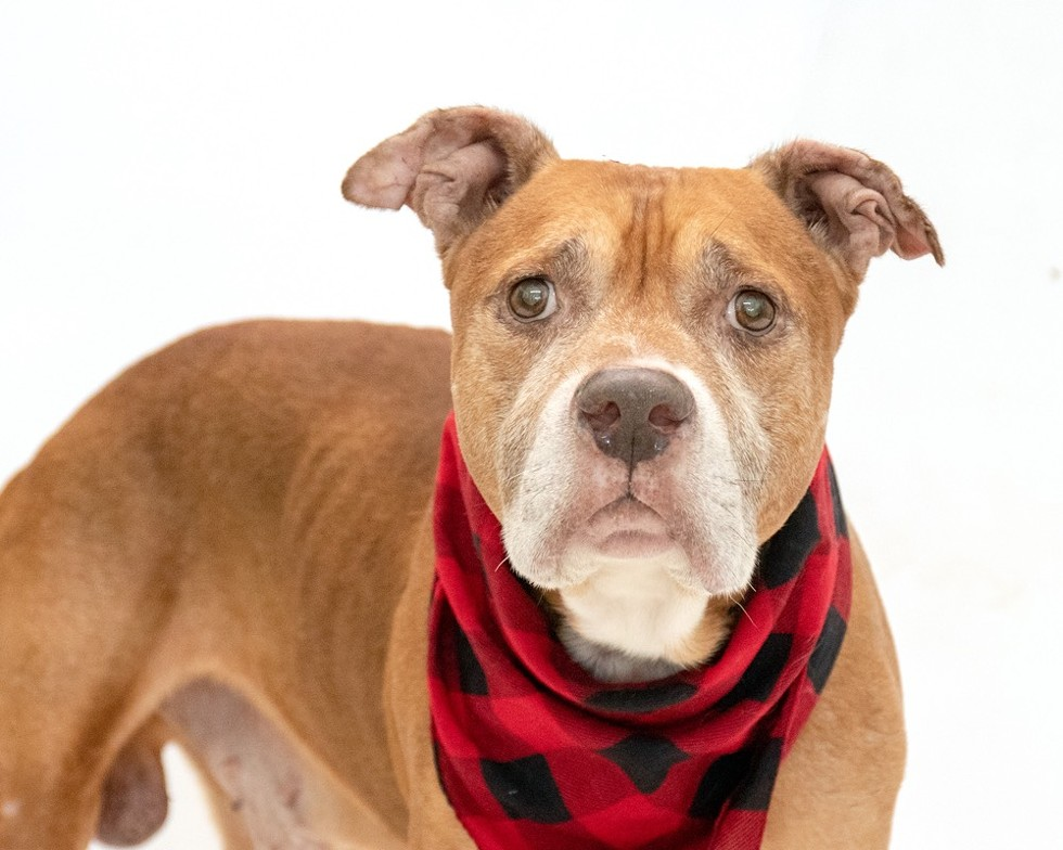 Buddha (A443770) - PHOTO BY PAWSITIVE SHELTER PHOTOGRAPHY