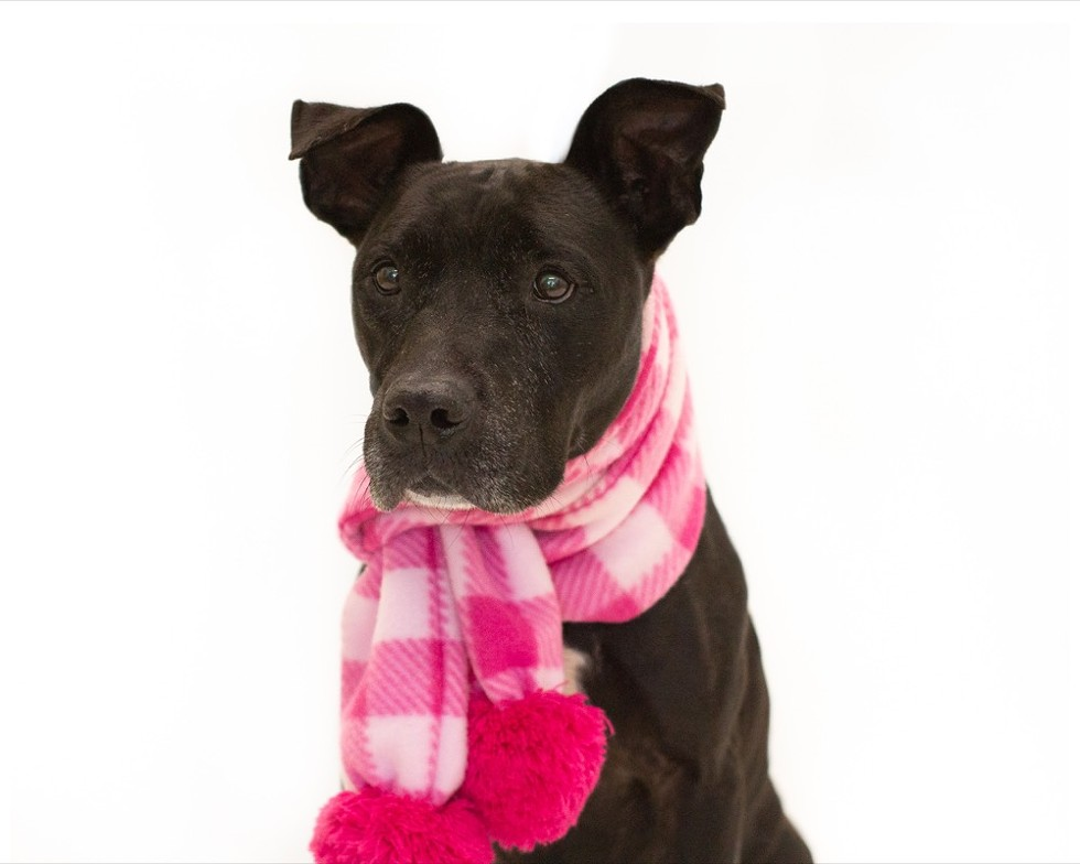 Pantera (A249104) - PHOTO BY PAWSITIVE SHELTER PHOTOGRAPHY