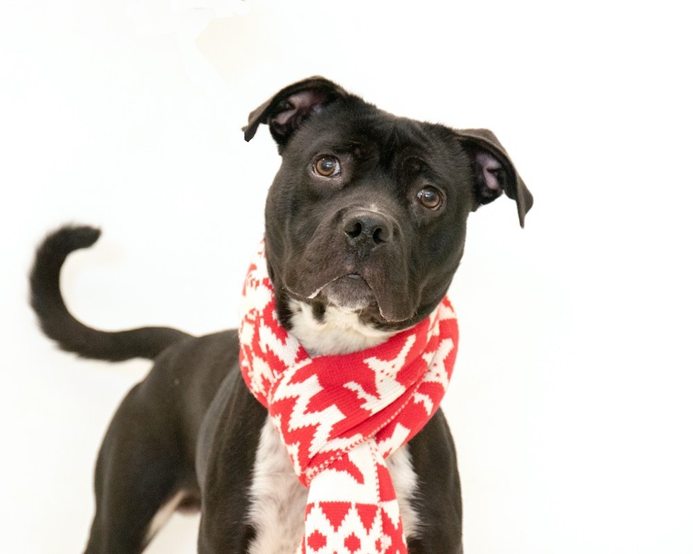 Guinness (A443707) - PHOTO BY PAWSITIVE SHELTER PHOTOGRAPHY