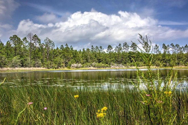 St. Teresa Bluffs, acquired Thursday as protected conservation land using Florida Forever funding - PHOTO VIA THE NATURE CONSERVANCY/FACEBOOK