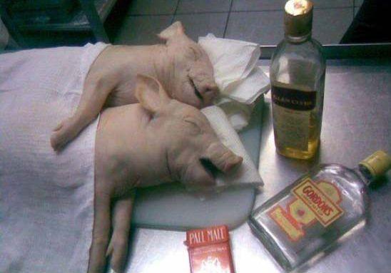 drunk_pigs.jpg