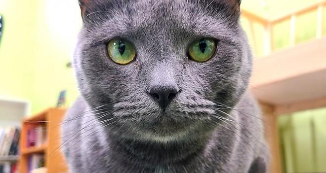 Meet Bongo - PHOTO COURTESY THE KITTY BEAUTIFUL/FACEBOOK