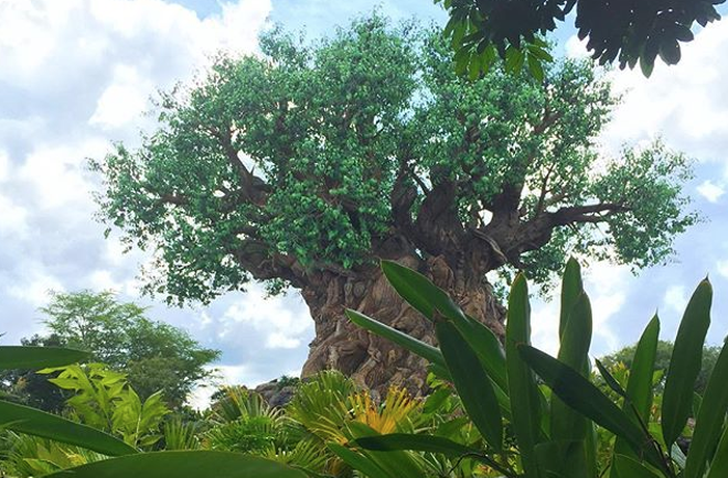 Disney's Animal Kingdom - PHOTO VIA PRINCESS_MEGAN_MARIE/INSTAGRAM