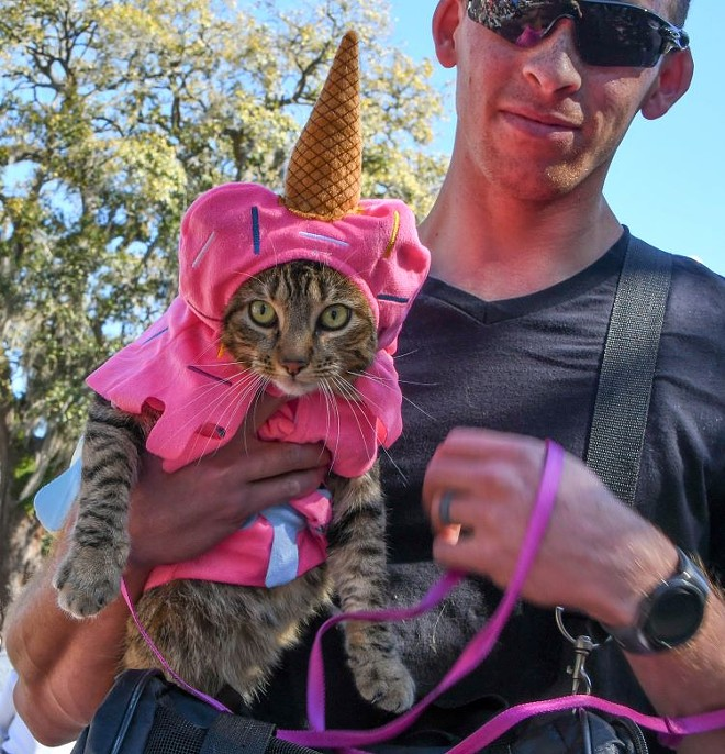 Paws in the Park, a fundraising festival by Pet Alliance of Greater Orlando, will take place May 8 in Lake Eola Park at 10 a.m. - PET ALLIANCE OF GREATER ORLANDO