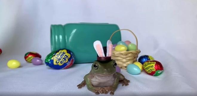 Betty, an Orlando-area tree frog, might be the next Cadbury bunny. - PHOTO VIA CADBURY