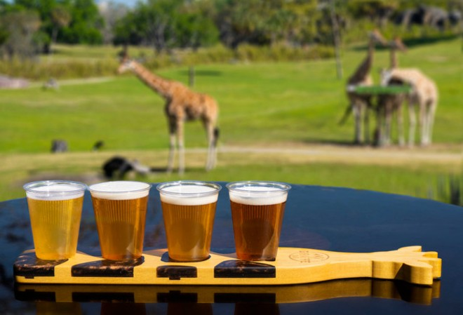 The Giraffe Bar at Busch Gardens opens its doors on March 19. - PHOTO VIA BGT PUBLIC RELATIONS