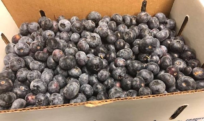 King Grove Blueberries - PHOTO COURTESY KING GROVE/FACEBOOK