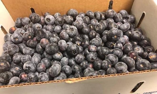 King Grove Blueberries - PHOTO COURTESY KING GROVE/FACEBOOK