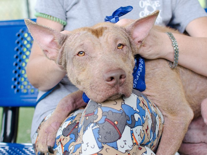 Find more information about King, the dog pictured above, here. - PHOTO VIA PAWSITIVE SHELTER PHOTOGRAPHY