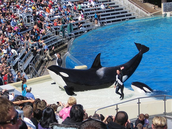 PHOTO VIA SEAWORLD