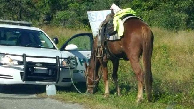 PHOTO VIA POLK COUNTY SHERIFF'S OFFICE