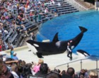 SeaWorld and former CEO fined $5 million after being accused of downplaying 'Blackfish' impact