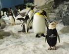 SeaWorld Orlando penguin has its own wetsuit and it's adorable
