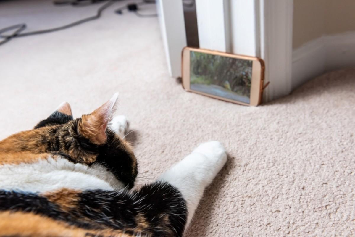 sel_cat_video_adobestock_275025544.jpeg