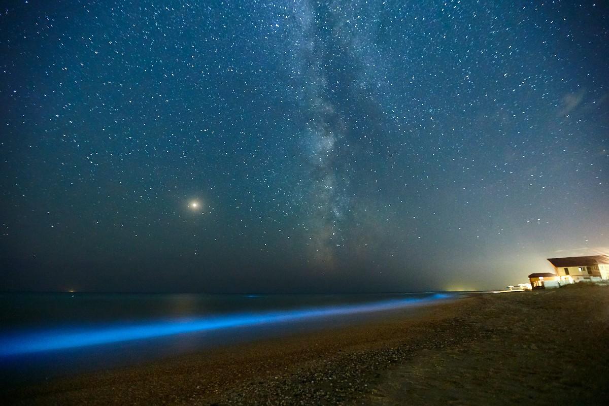bioluminescent_adobestock_273731773.jpeg