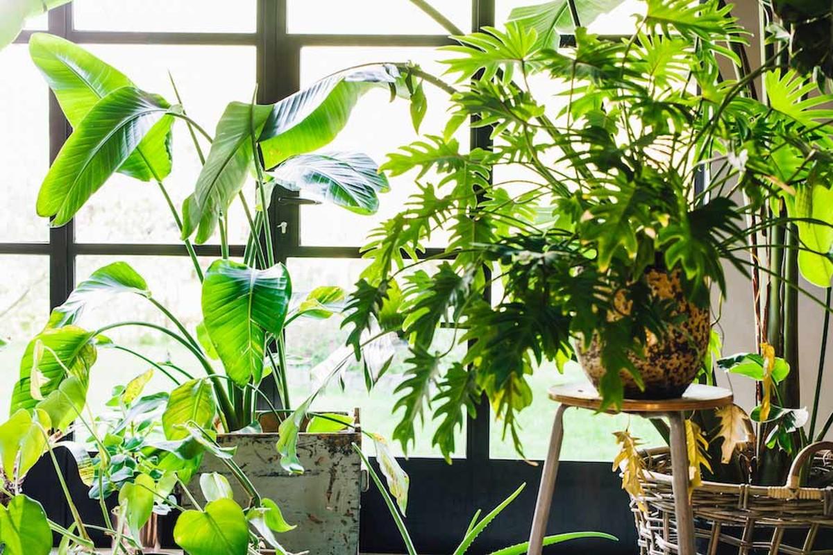 g_s_staff-pick_plants_byhugogoudswaard.jpg