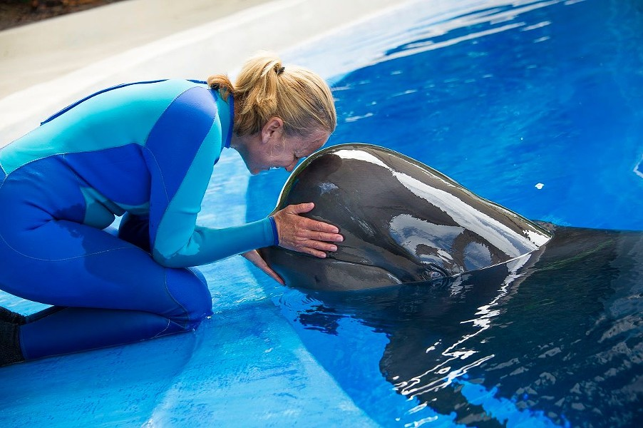 PHOTO VIA SEAWORLD/FACEBOOK