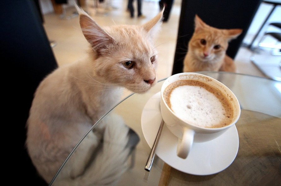 PHOTO VIA LE CAFE DES CHATS, PARIS