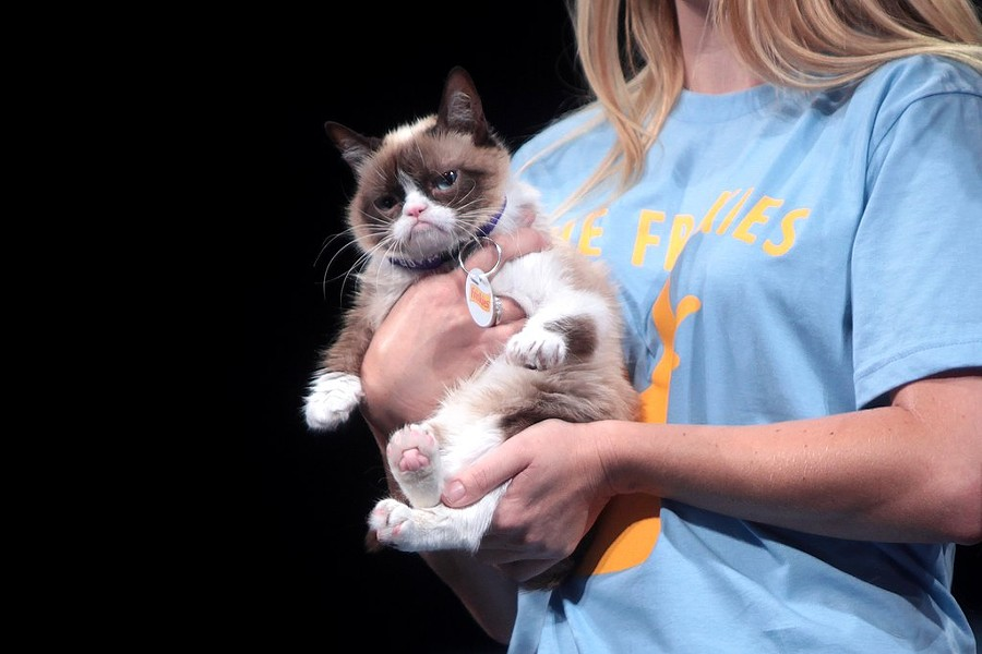 Grumpy Cat at the 2014 VidCon in Anaheim, California - PHOTO BY GAGE SKIDMORE VIA WIKIMEDIA COMMONS