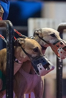 Florida voters will decide whether or not to ban dog racing this November