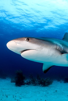 New rules loom for shark fishing in Florida