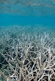 Your sunscreen is killing coral reefs, says recent study