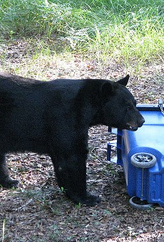 A test of a bear-proof trashcan held by the FWC.