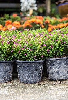Leu Gardens hosts its annual spring plant sale this weekend