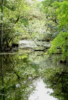 Trump budget falls short $130 million on Florida Everglades restoration
